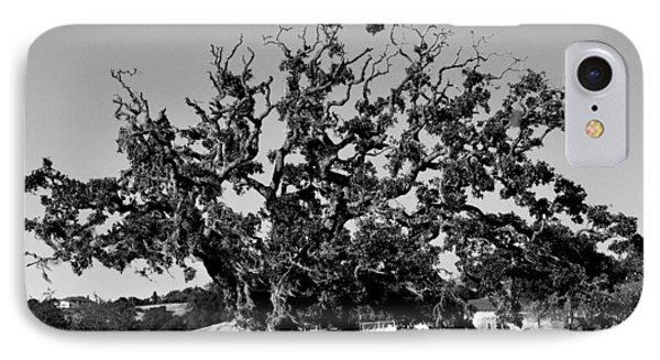 California Roadside Tree - Black And White IPhone Case by Matt Harang