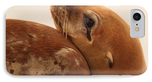 IPhone Case featuring the photograph California Sea Lion Pup Resting Against Mother by Max Allen