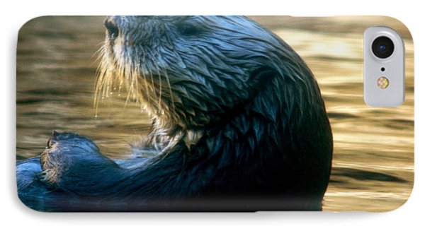 IPhone Case featuring the photograph California Sea Otter by Jan Cipolla