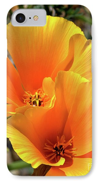 IPhone Case featuring the photograph Californian Poppy by Baggieoldboy