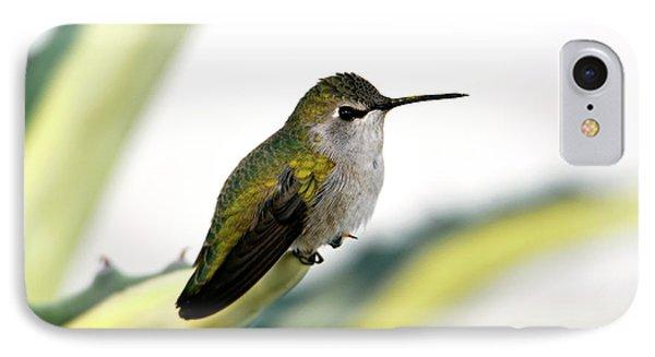 Calliope Hummingbird On Agave IPhone Case