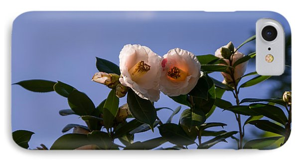 Camellia On The Branch IPhone Case by Zina Stromberg