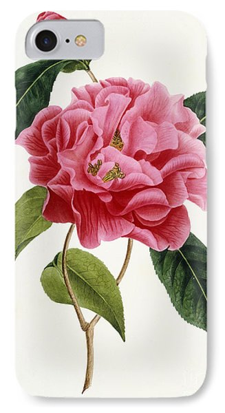 Camellia Reticulata IPhone Case by French School