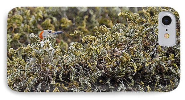 Camouflaged Red-bellied Woodpecker IPhone Case by Carolyn Marshall