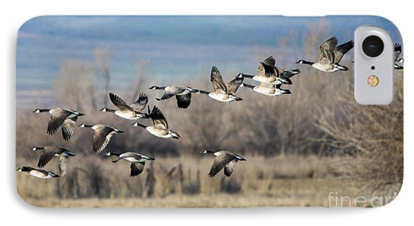 Canada  Geese Flock IPhone Case by Mike Dawson