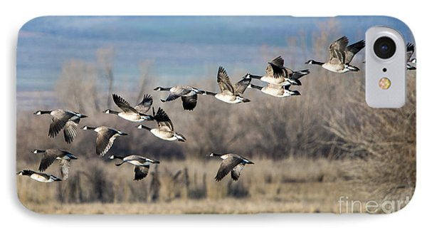 Canada  Geese Flock IPhone 7 Case by Mike Dawson