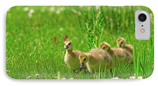 IPhone Case featuring the photograph Canada Goose Goslings In A Field Of Daisies by Sharon Talson