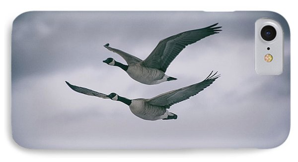 Canadian Geese In Flight IPhone Case by Jason Coward