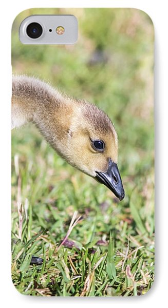 Canadian Gosling IPhone Case by Robert Frederick