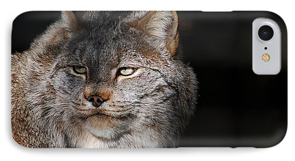 Canadian Lynx  20130107_57 IPhone Case by Tina Hopkins