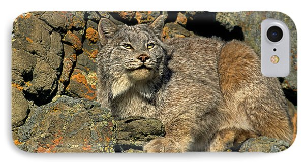 IPhone Case featuring the photograph Canadian Lynx On Lichen-covered Cliff Endangered Species by Dave Welling