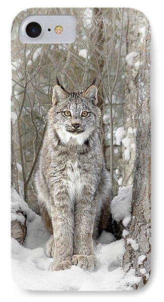 Canadian Wilderness Lynx IPhone Case