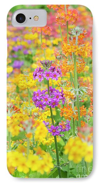 Candelabra Primula Flowers IPhone Case by Tim Gainey