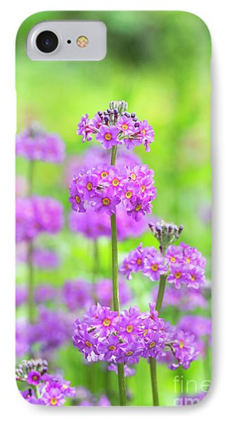 Candelabra Primula IPhone Case by Tim Gainey