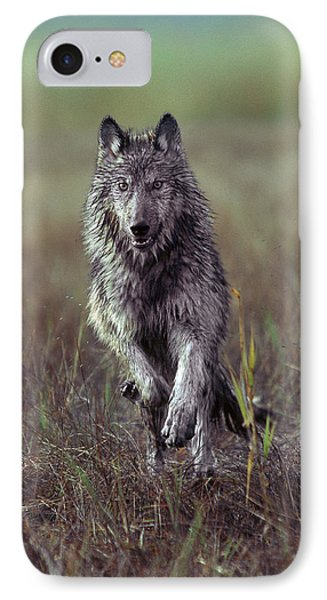 Canis Lupus IPhone Case by Tim Fitzharris
