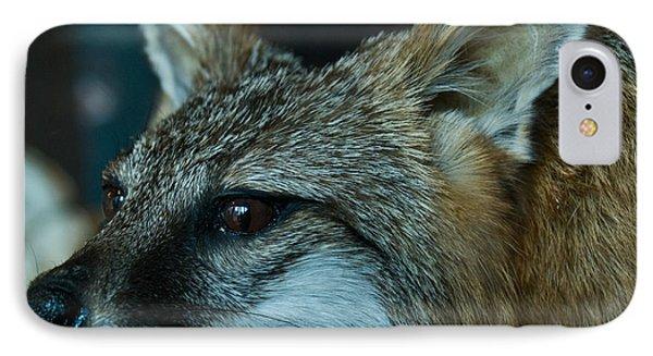 Canis Species Phone Case by Douglas Barnett