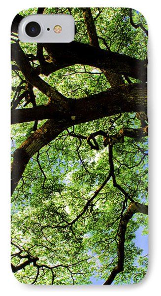 Canopy 1 IPhone Case by Rob Tullis