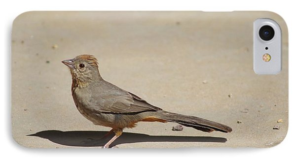 Canyon Towhee Begs IPhone Case