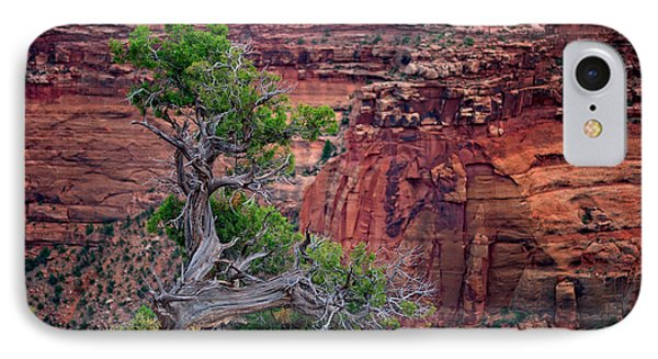 Canyonlands Juniper IPhone Case by Rick Berk