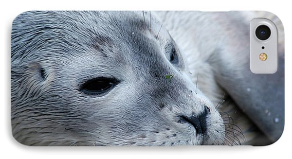 IPhone Case featuring the photograph Cape Ann Seal by Mike Martin