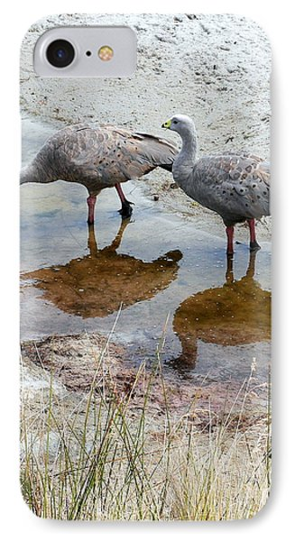 Cape Baron Geese On Maria Island 2 IPhone Case by Lexa Harpell