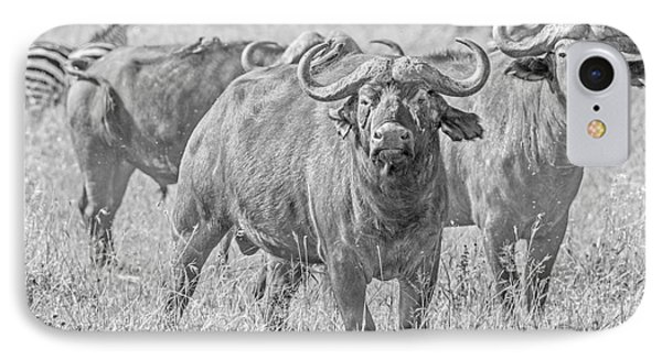 Cape Buffalos In Serengeti IPhone Case