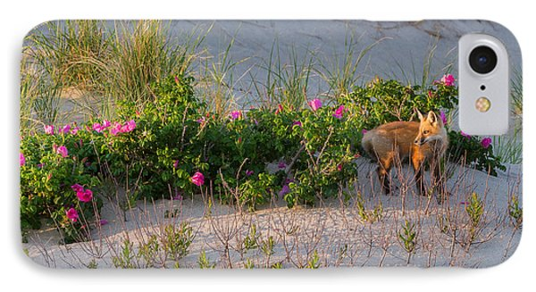 Cape Cod Beach Fox IPhone Case by Bill Wakeley