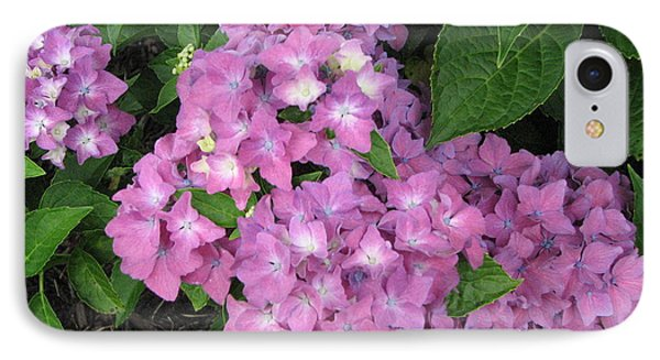 Cape Cod Hydrangeas IPhone Case