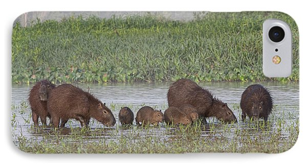 Capybara IPhone Case by Wade Aiken
