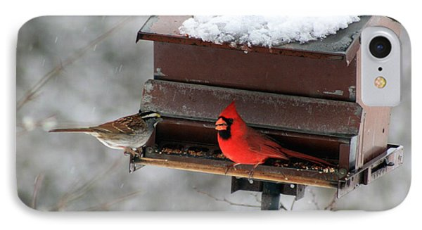 Cardinal And Sparrow At Feeder IPhone Case by George Jones
