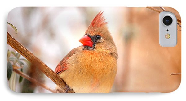 Cardinal Bird Female Phone Case by Peggy Franz