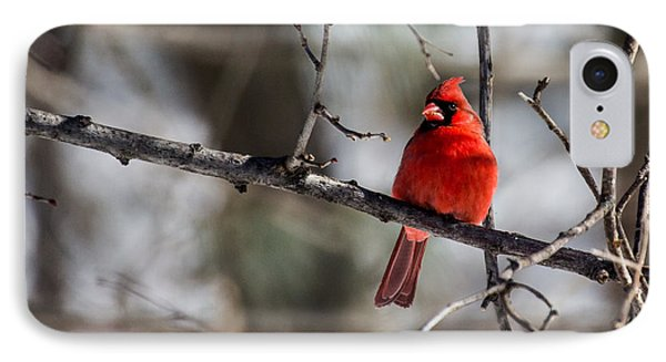 IPhone Case featuring the photograph Cardinal by Dan Traun