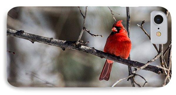 Cardinal IPhone Case by Dan Traun