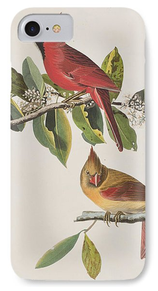 Cardinal Grosbeak IPhone Case by John James Audubon