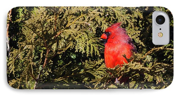 IPhone Case featuring the photograph Cardinal I by Michelle Wiarda