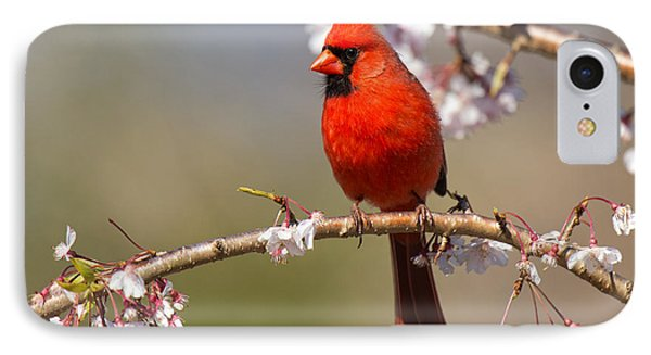 Cardinal In Cherry Phone Case by Angel Cher