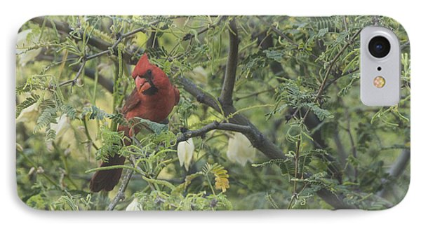 Cardinal In Mesquite IPhone Case