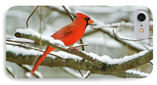 Finch iPhone 7 Case - Cardinal In Snow by Laura D Young
