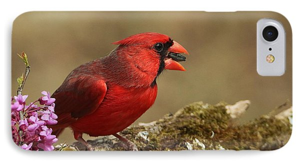 Cardinal In Spring IPhone Case by Sheila Brown