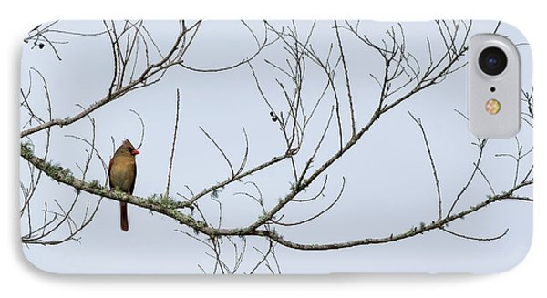 IPhone Case featuring the photograph Cardinal In Tree by Richard Rizzo