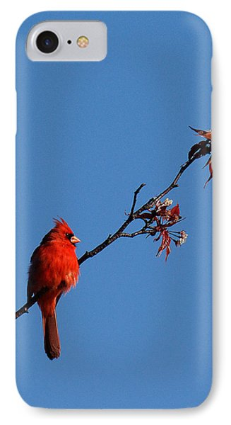 IPhone Case featuring the photograph Cardinal On A Cherry Branch Dsb033 by Gerry Gantt
