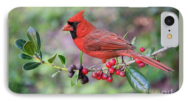 IPhone Case featuring the photograph Cardinal On Holly Branch by Bonnie Barry