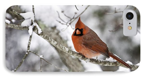 Cardinal On Snowy Branch Phone Case by Rob Travis