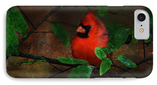 Cardinal IPhone Case by Perry Van Munster