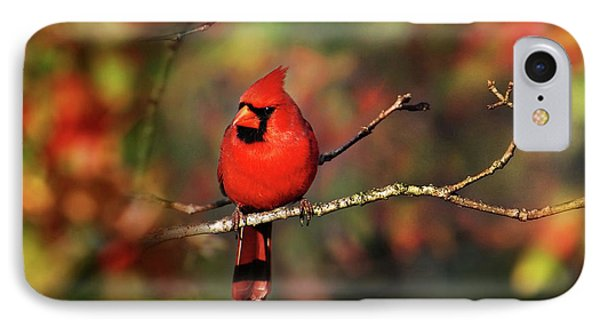 Cardinal Territory Phone Case by Christina Rollo