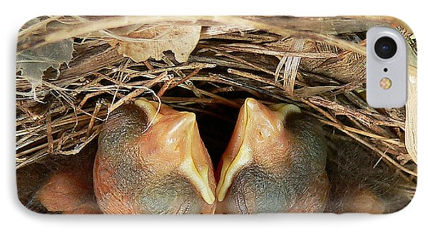 Cardinal Twins - Snugly Sleeping IPhone Case by Al Powell Photography USA