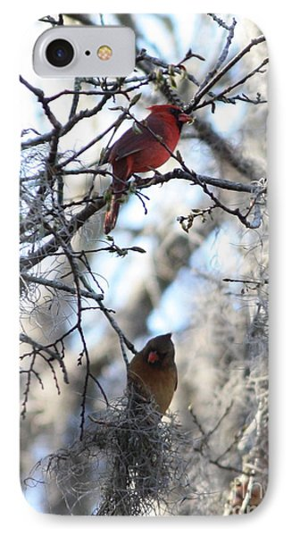 Cardinals In Mossy Tree IPhone Case by Carol Groenen
