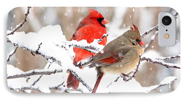 Cardinals In The Winter IPhone Case by Trina Ansel