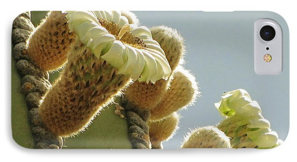IPhone Case featuring the photograph Cardon Cactus Flowers by Marilyn Smith