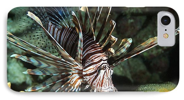 Caribbean Lion Fish IPhone Case